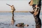 شکار پرندگان وحشی و مهاجر در البرز ممنوع شد