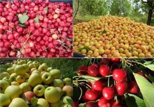 تولید سالانه۲۰ رقم زراعی و باغی جدید در کشور