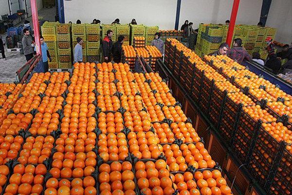 قیمت مصوب پرتقال و سیب تنظیم بازار در استان البرز اعلام شد