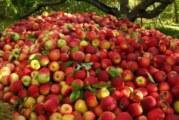 مدیرعامل شرکت مجری احیاء باغ سیب مهرشهر:  مردم در ایام نوروز زمین خالی در باغ سیب کرج نخواهند دید!