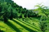 سرمایه گذاری در منابع طبیعی کشور زمینه ساز اشتغال و نجات طبیعت است