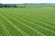 هواشناسی البرز روش های علمی به کشاورزان توصیه کرد