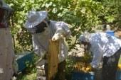 ۲۸۶ تن عسل در زنبورستان های البرز تولید می شود