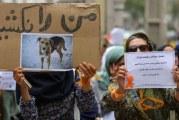 سگکشی با سیانور/ شهرداری هشتگرد برای عقیمسازی سگها بودجه میگیرد اما آنها را میکشد!