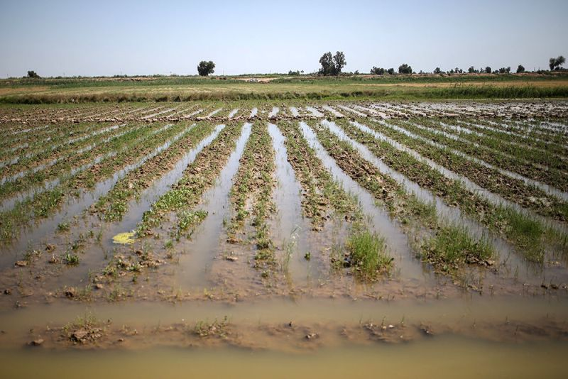 جزئیات میزان خسارات واردشده به بخش کشاورزی البرز اعلام شد
