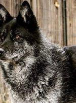 جمعیت سگهای بلاصاحب کنترل نشود گرگاسها به صحنه میآیند!