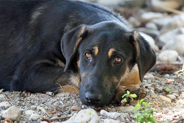 سگ های بلاصاحب کرج ماهی ۴۰۰ میلیون تومان خرج دارند